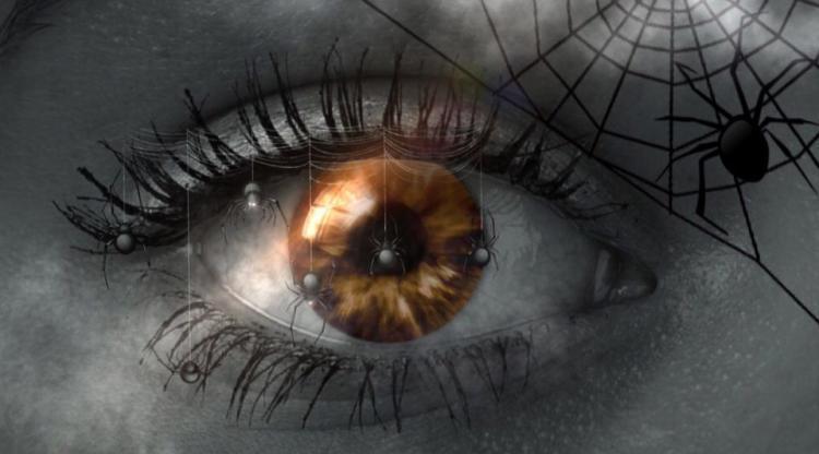 oog met spin en spinnenweb