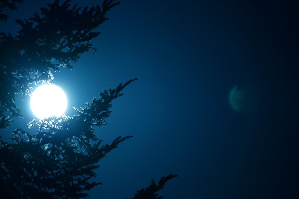 volle maan met boom