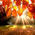 herfstbladeren met zonlicht