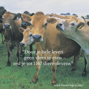 koeien met de quote: