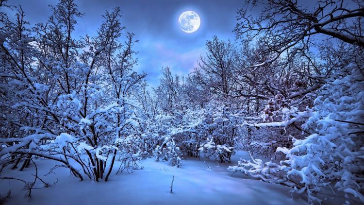 sneeuwmaan met sneeuw op bomen