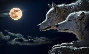 wolfsmaan