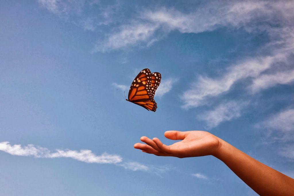 loslaten van vlinder in de lucht