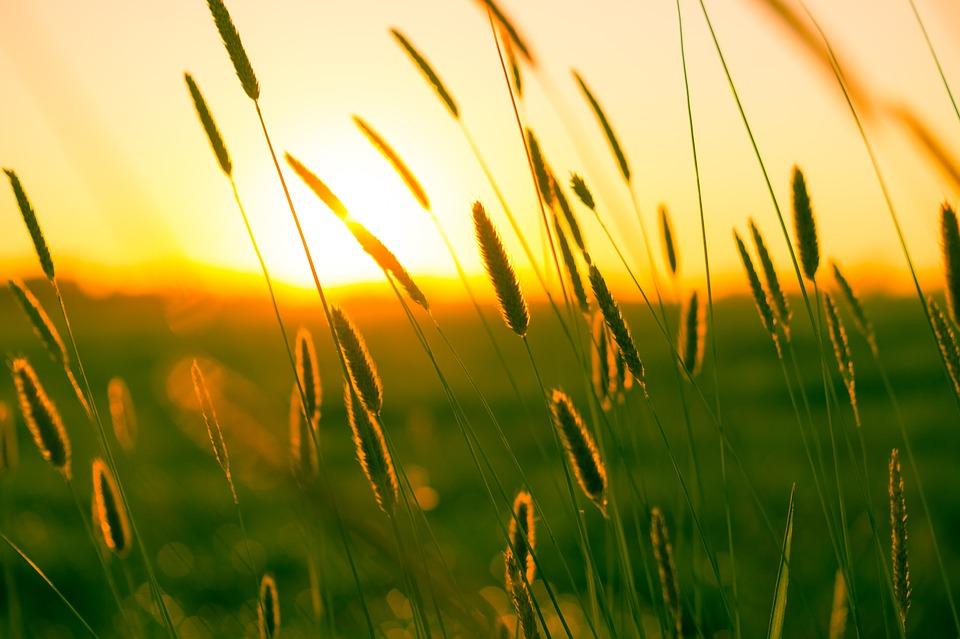 sfeer beeld: zon schijnt