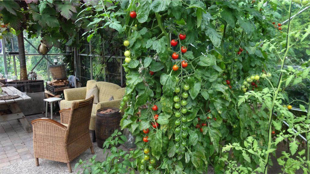 kas-tomaten