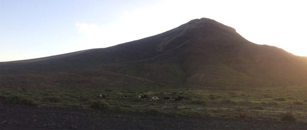 geiten Fuerteventura
