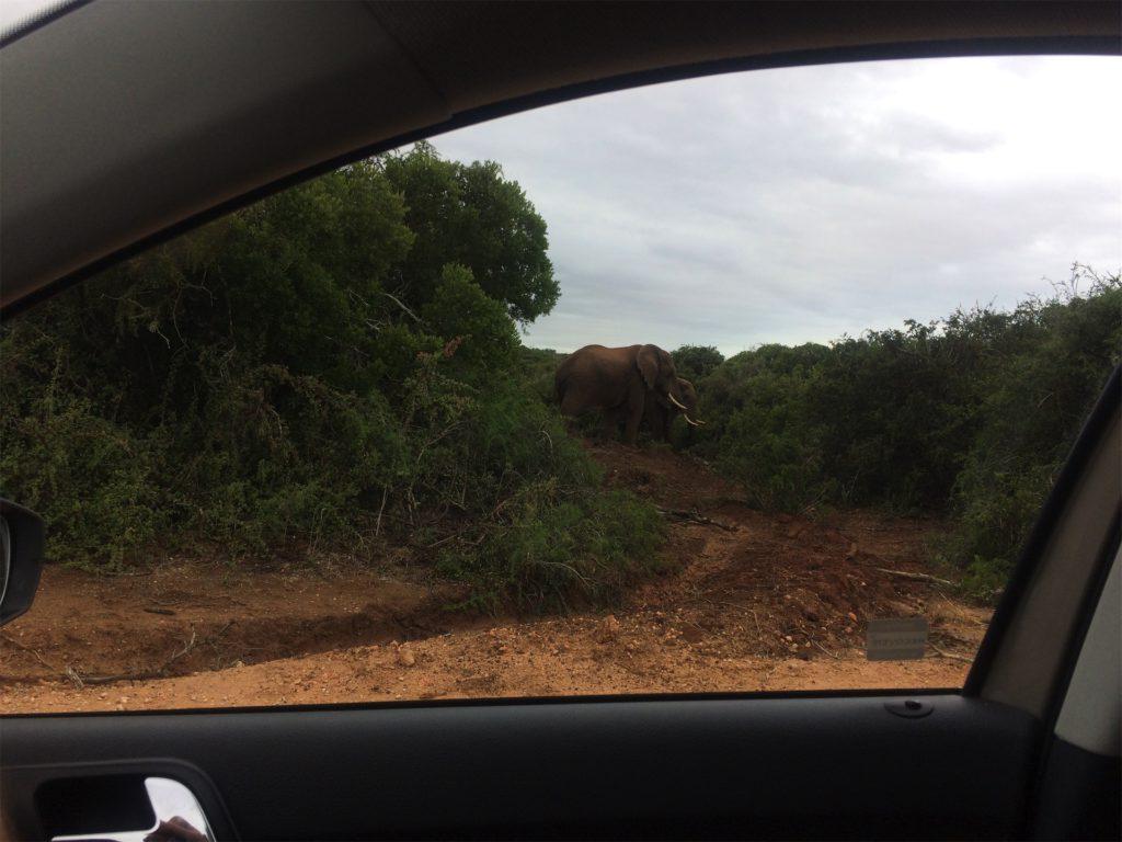 addo-elephant-park-olifanten