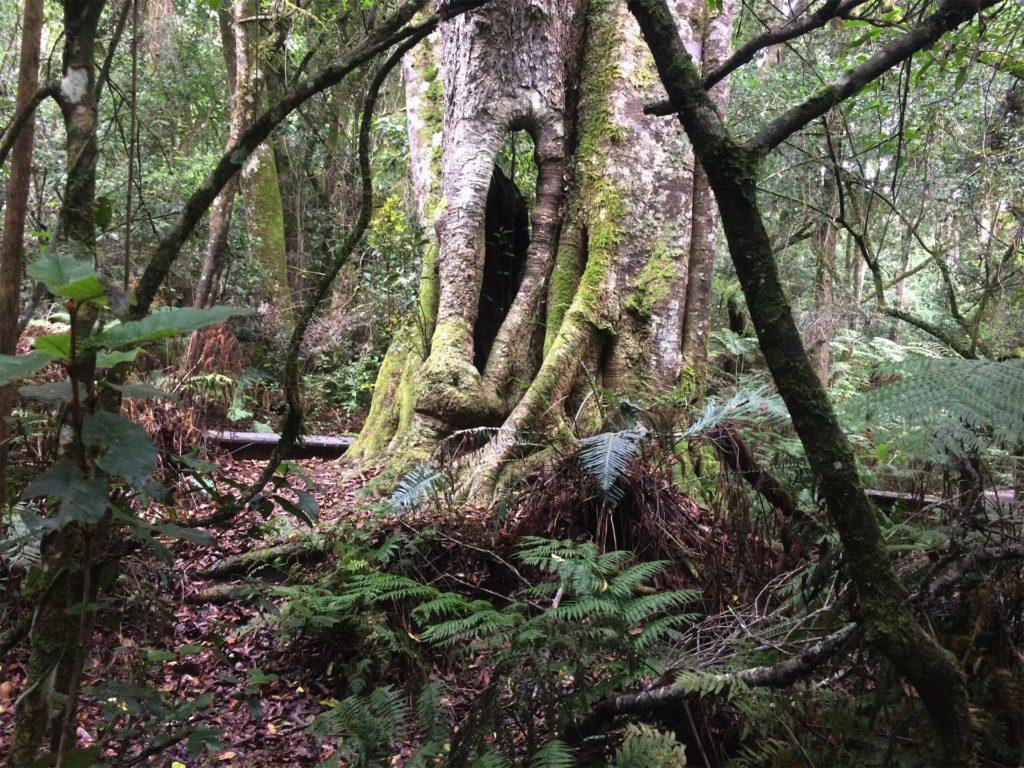 boom tijdens de Garden of Eden wandeling Zuid-Afrika