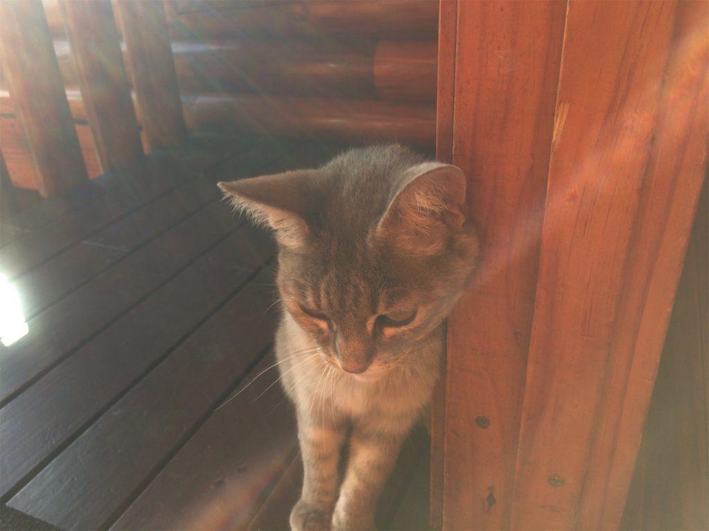 kat in Knysna
