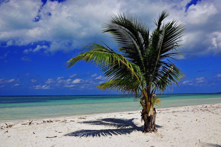 strand met palmboom op Cuba