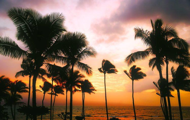 zonsondergang op Hawaii met palmbomen