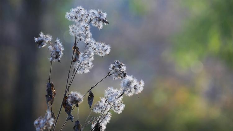 bloemen uitgedroogd