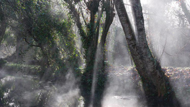 bomen in de Dordogne in zonlicht