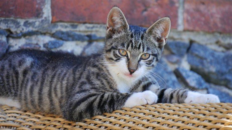 kitten ligt op bank