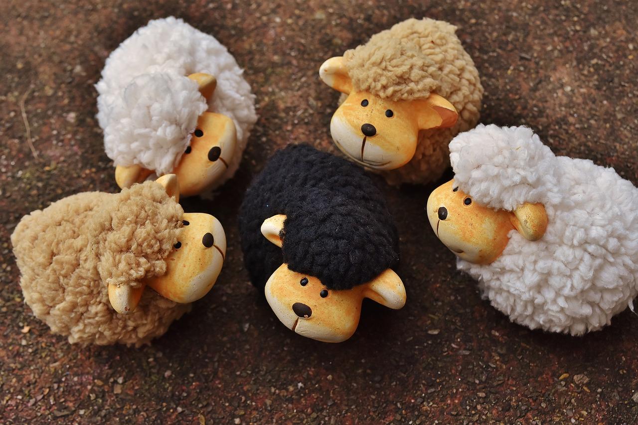 zwart knuffel schaap tussen witte knuffel schapen