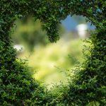 hartvorm in heg