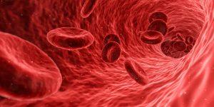 bloedcellen