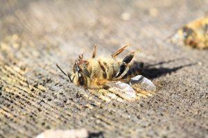 dode bij door pesticiden